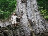 Вот такие деревья на Хива